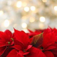 クリスマスに香りをプラス!香水の付け方3つのポイント
